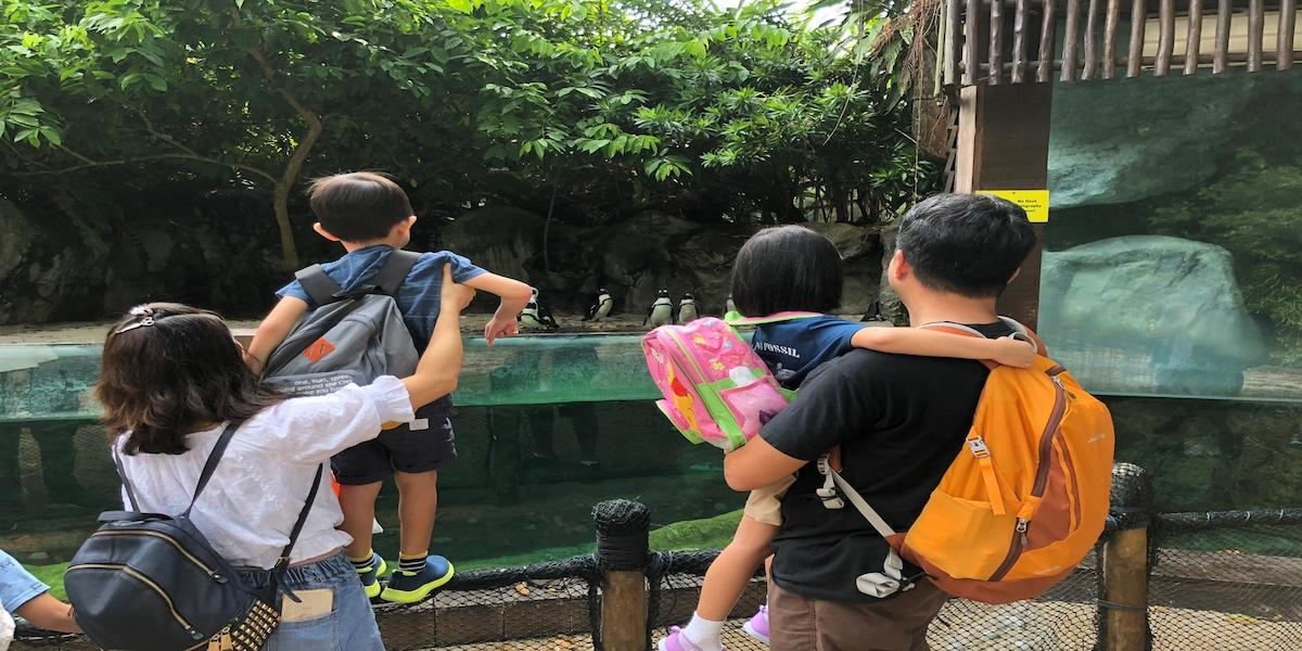 Outing to the Zoo